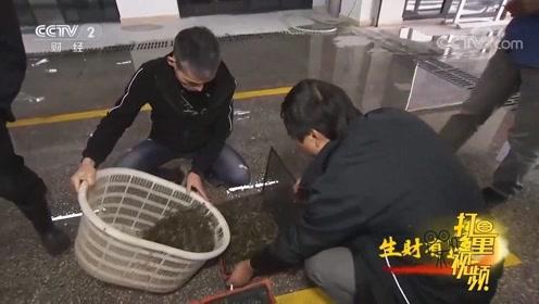 实拍下渚湖最大的青虾交易市场,生猛的虾一车车卖