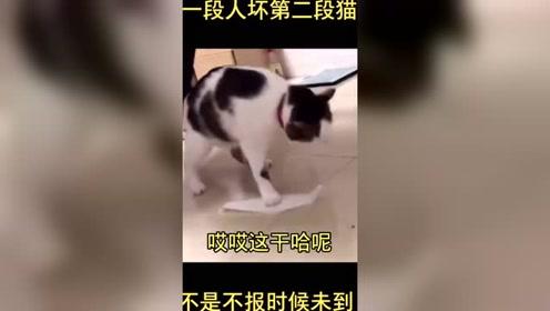 #搞笑猫咪 #动物成精 #搞笑段子