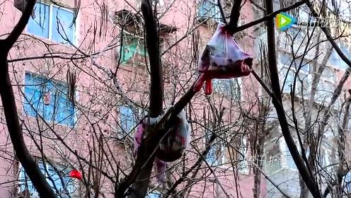 """小区内现""""垃圾树""""树杈被挂满垃圾"""