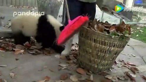 这么萌的熊猫宝宝你见过么?
