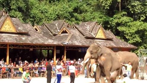 搞笑视频,大象选美女?