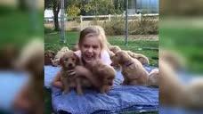 小女孩被金毛围攻,还是一群小金毛,萌坏了