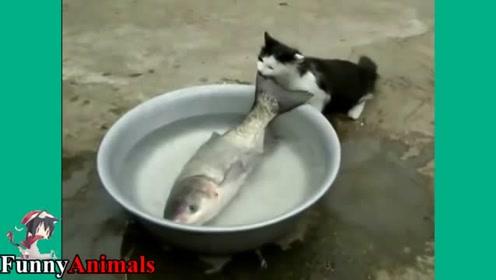动物一起来抓鱼!—动物搞笑视频合集 听说猫爱