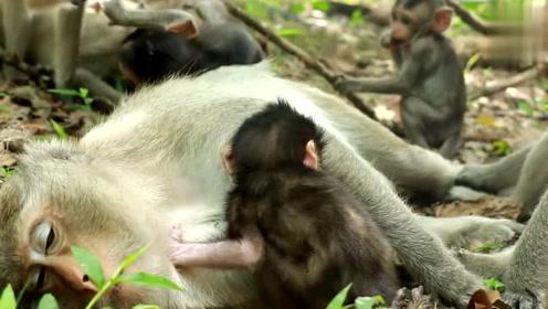 北京动物园肆意投喂屡禁不止 爷爷铁丝穿瓜子现场教孙儿喂猴