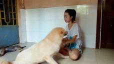 美女主人陪狗狗在家里玩耍,狗狗被食物吸引,太有爱了