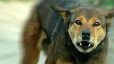 如果自己养了5只猎犬,其中一只攻击主人,剩下的4只会做什么?