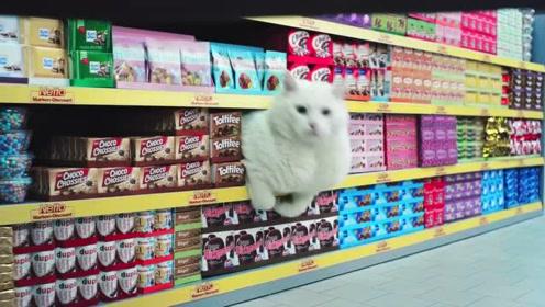 魔性的德国超市广告 -- 如果超市被猫猫们占领了
