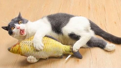 搞笑动物视频,笑的肚子疼的宠物日常#1
