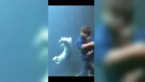 外国小伙和动物玩,这一幕的画面太搞笑!