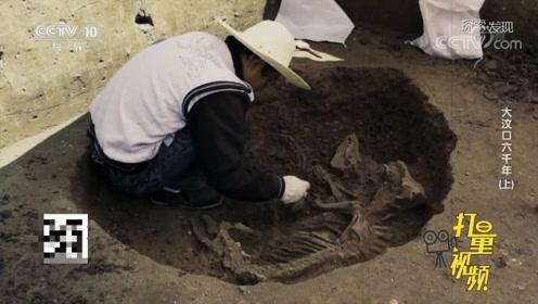 """""""家""""字的来源竟与猪直接相关?考古发现呈现古人智慧"""