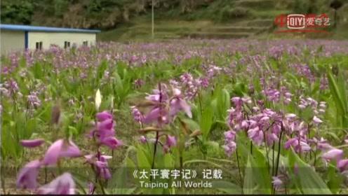 蕲春旅游宣传片
