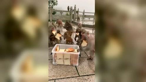 下了一天的暴雨猴子太饿了#热门#动物世界#萌宠#宠物109