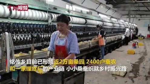安徽:桑蚕织就乡村振兴路
