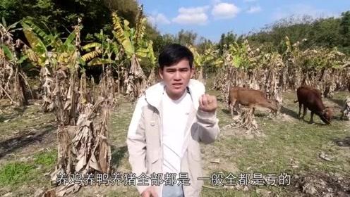 这才是农村最赚钱的养殖行业,大叔年入十几万?