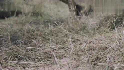 猎手:鬼子关东军训练有素,却被几个乡下猎户轻松捕杀,厉害