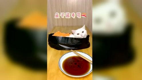 猫咪美食系列(9)请大家吃寿司拼盘 管饱!