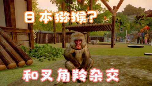 动物园之星14:把日本猕猴和羚羊关在一起,会生出什么样的动物呢?