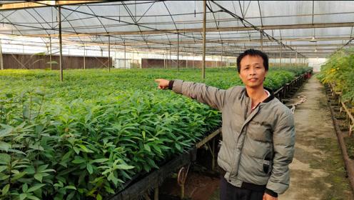 农村新型暴利行业,投资7万培养国家一级保护植物,年收入200多万
