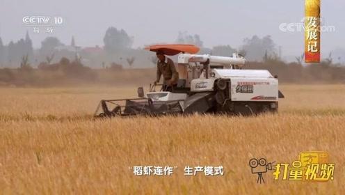 """从种植棉花到""""稻虾连作"""",村民的生活得到了改善"""