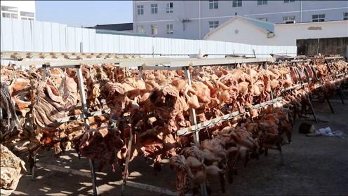 壕气!江苏女子家中挂4000个猪头:一只能卖200多元,提高生活质量