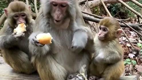 猴子都是吃独食的,就连小猴子要也不给,这猴妈妈是不是太狠心了!
