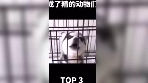 搞笑视频:成了精的动物们