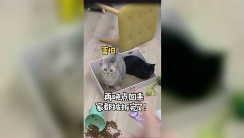 千万不要丢下你的猫,独自去旅游!