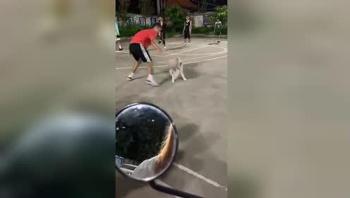 有点厉害!小伙篮球场运球惨遭狗子断掉