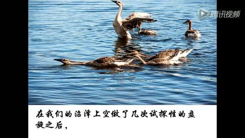 Eighth grade Chinese Vol. 7 Return of the Wild Goose (Leopold)
