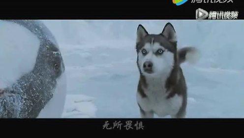 狼性团队 活下去就是一切!