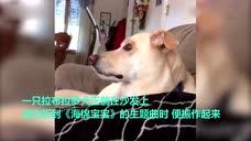 狗狗跟着电视唱《海绵宝宝》主题曲,网上意外走红