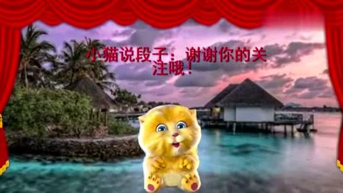 小猫讲笑话:老婆快夸我乖不乖,乖不乖,看一次笑一次!