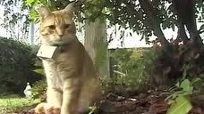 十大网红猫无敌可爱十大网红猫,你知道的是哪一只?