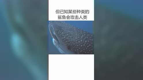 热门视频:全世界最危险的鲨鱼之一