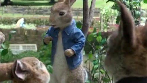 动物搞笑对话,这女兔子点了一大堆食物,胃口