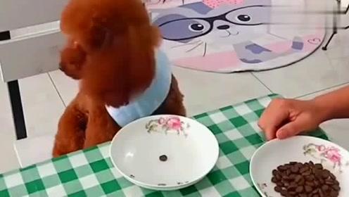 小哥看到老婆给他和泰迪准备的晚饭,瞬间不淡