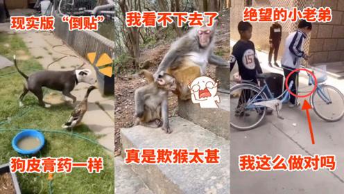 搞笑动物:这狗子的翻墙技术了不得啊,大门对