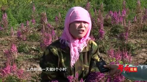 【号角视频】走向我们的小康生活•金城40村:王家坪村美了乡村富了乡亲