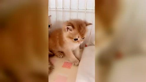 男朋友刚买的小*猫,一回家就要抱抱,小样子太