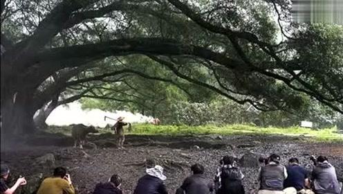 视频展示何为中国式摄影,是造假吗你接受吗