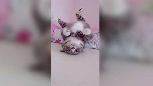 """好可爱的小猫咪,一生气就躺床上""""装死"""",太戏精!"""