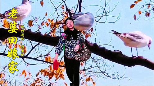 音乐短片《老婆回娘家》,诙谐幽默,妙趣横生!
