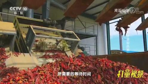 用辣椒粉提取色素效率太低,专家逛养殖场,竟找到办法