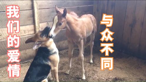 搞笑动物:狗和马的爱情故事,小猫咪被它爹坑