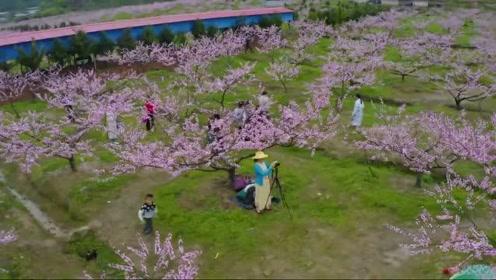 """遂川有个像""""桃花岛""""的地方,吸引大量人前来游玩!"""