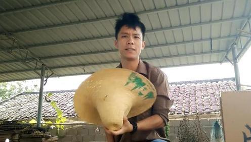 恭城农村的免费摘柿子活动