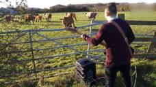 小伙想试试对牛弹琴会怎么样,结果尴尬了,牛:好难听,快走!