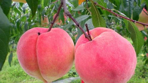 七年级语文下册18 一棵小桃树(贾平凹)