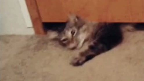 搞笑动物:猫会缩骨功,这么小都能钻过来!