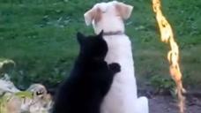看着狗狗惆怅的背影,猫咪安抚了起来,猫咪: